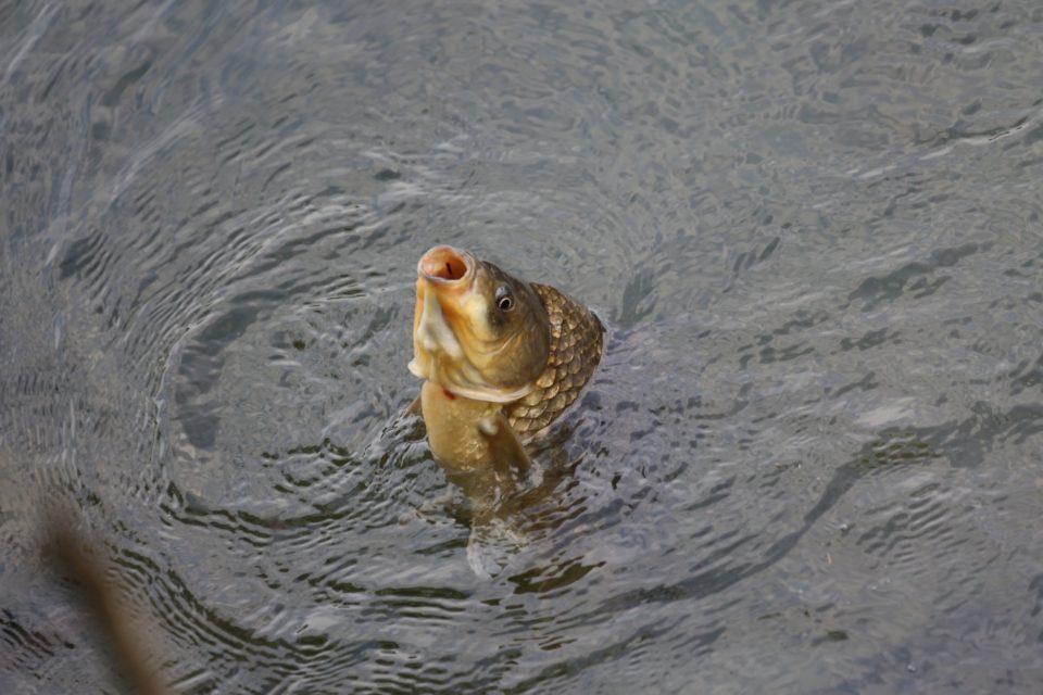 appâts pour la pêche à la carpe